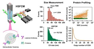 Protein Profiling and Sizing of Extracellular Vesicles from Colorectal Cancer Patients via Flow Cytometry