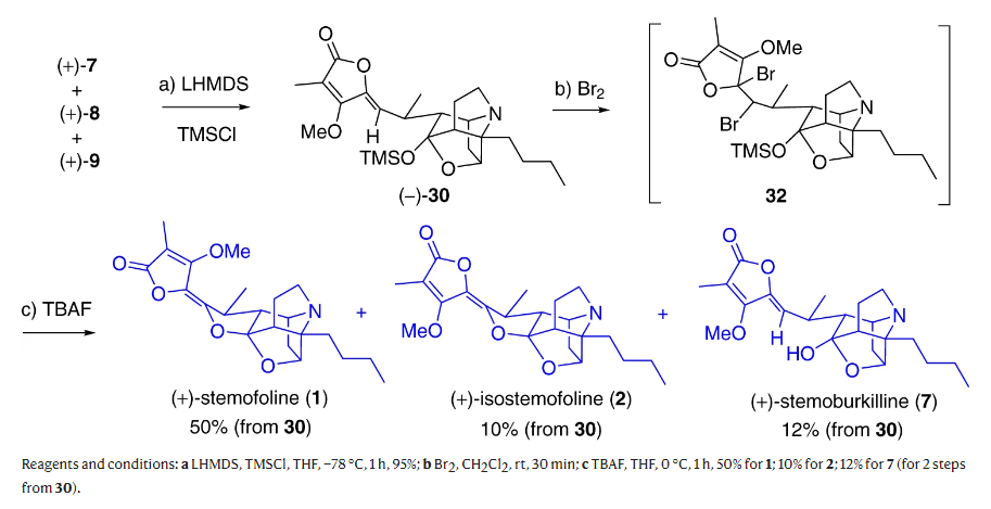 Enantioselective total syntheses of (+)-stemofoline and three congeners based on a biogenetic hypothesis