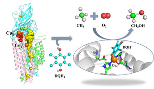 [Nature Catalysis] Deciphering the Oxygen Activation Mechanism at the CuC Site of Particulate Methane Monooxygenase